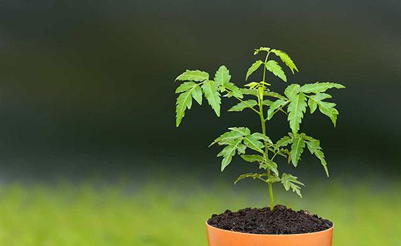 Vastu for Plants and Garden | Vastu for Landscaping | Vastu
