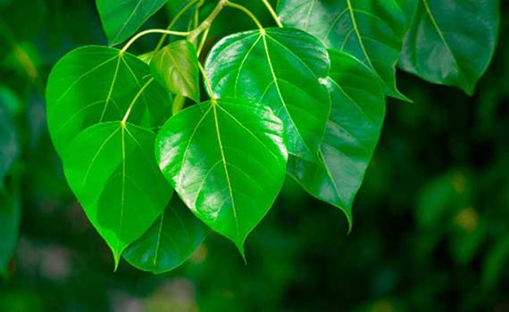vastu for plants and garden